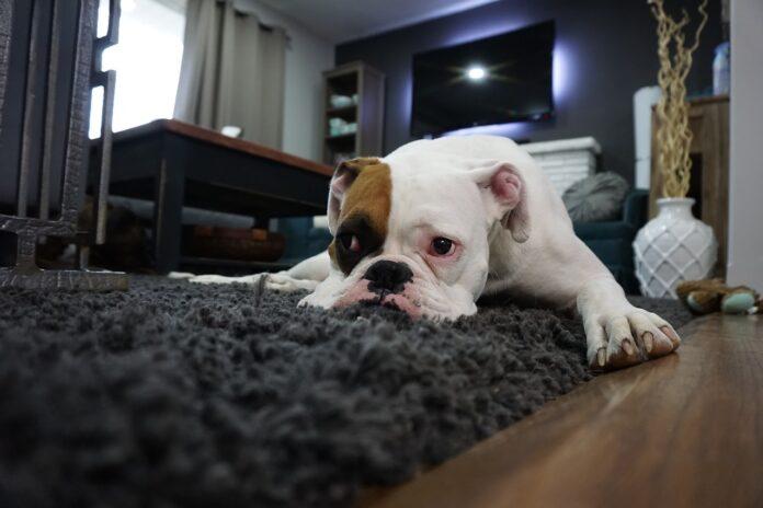 Adoptując psa, pamiętaj o jego podstawowych potrzebach